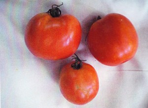 Tomatoes 17-7 without GEN200